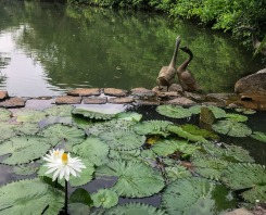 Swan sculptures at Swan Lake