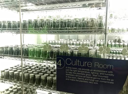 culture10
