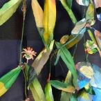 Flowers on the vine